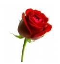 Rosa Por Unidad