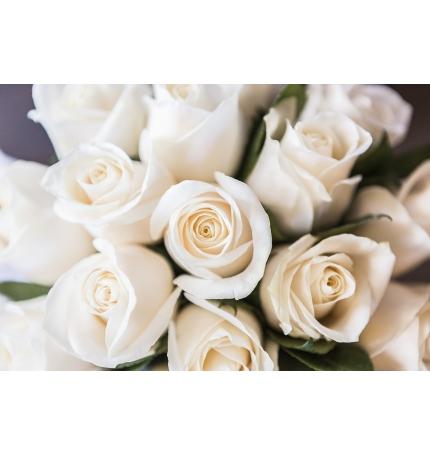 Docena de rosas Blancas Cali